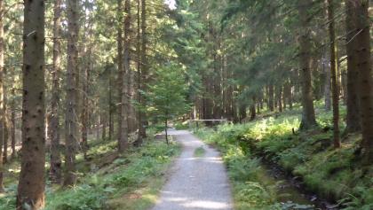 Path alongside tge water channel