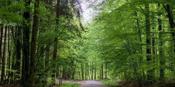 Wege im Buchenwald