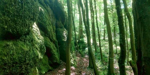 Bemooste Felsen in der Landgrafenschlucht