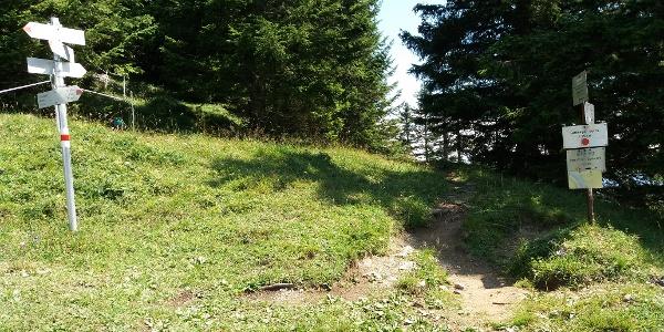 Wegweiser und Steig auf dem Spitzwiesle, 1700 m.