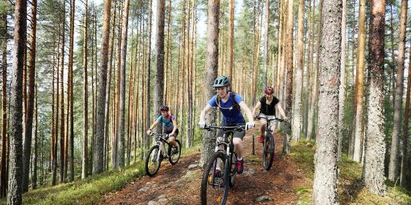 Moränenzunge Joutsniemi im Nationalpark Leivonmäki