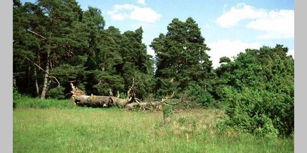 Nöttinger Heide
