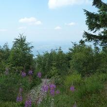 Ausblick unterhalb des Hornisgrinde-Aussichtsturmes