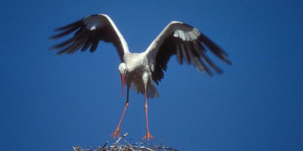 Mit viel Glück ist gar ein Storch zu sehen