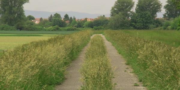 Fahrradweg mit MIttelstreifen