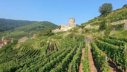 Blick auf die Burgruine Kaysersberg