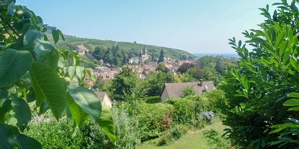 Erster Blick auf Ribeauvillé am Ende der Wanderung