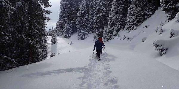 Schneeschuhtrail Jänzi Panorama Trail
