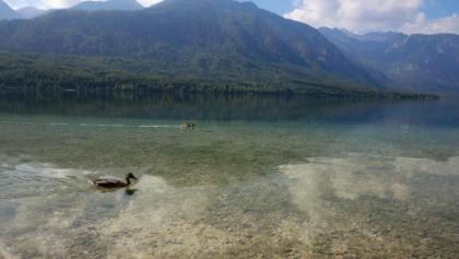 Bohinjso jezero