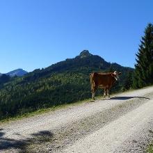Ob wir jetzt noch in Bayern oder in Tirol sind, weiß nicht mal die Kuh