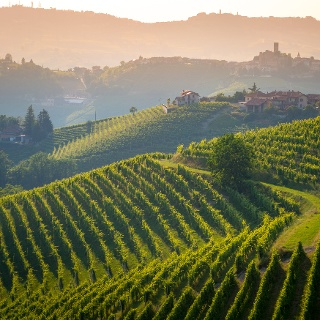 Barolo Wine Region
