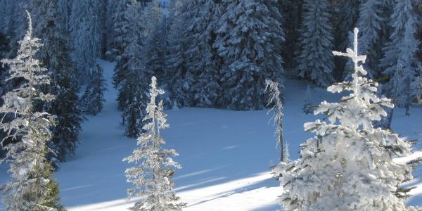 Auf dem Winterwanderweg im Gebiet Schwändeli