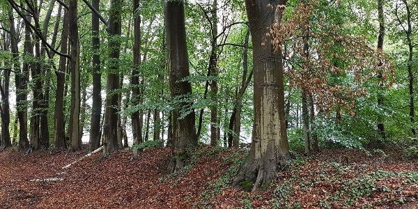 Uelsener Wald