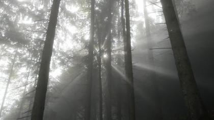 Ab durch die Nebel-Sonnen-Grenze!