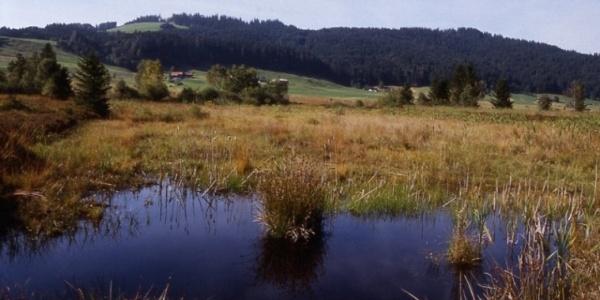 Hochmoor von Rothenthurm