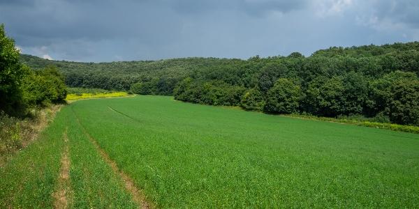 A Bodza-völgy