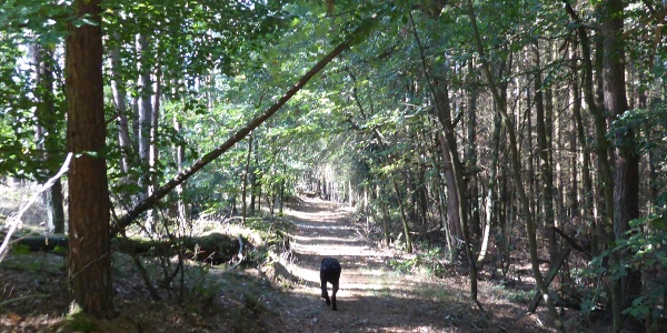 Waldweg mit Hund