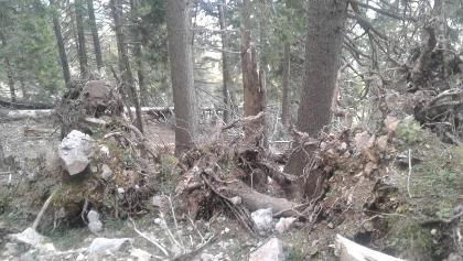 Windbruch am Raxenmäuersteig