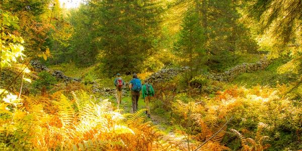 Zauberhaftes Herbstlicht im Wald