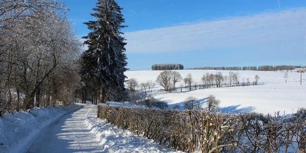 Winterwandern rund um Schöneseiffen
