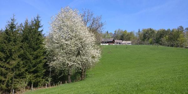 Schwanberg - Bergbauernhof