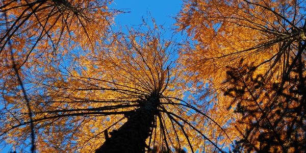 Herbstlicher Zustieg zum nördlichen Grafensteig