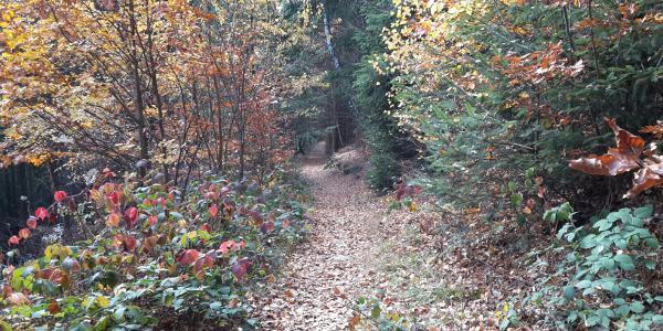 Wanderweg 9 Richtung Riederinfelsen
