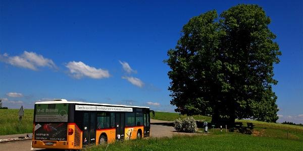 Bushaltestelle bei der Linde von Linn.