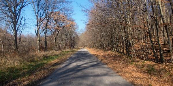 Forgalomtól elzárt erdei utak varázsa