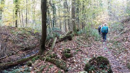 Schmaler Steig durch den Wald am Schmelzbach entlang.