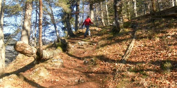 weicher Waldboden