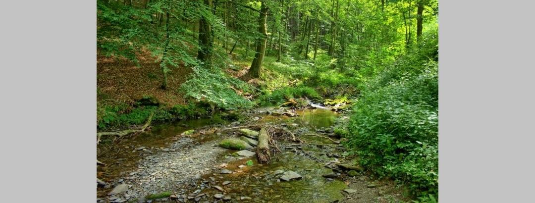 Wald, Wasser und Wildnis bieten jede Menge Lebenräume für die unterschiedlichsten Tier- und Pflanzenarten.