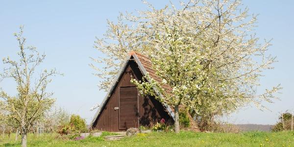 Hütte zur Apfelblüte