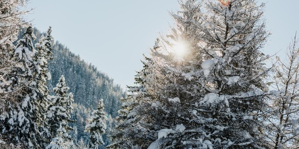 Verschneiter wildromantischer Pischewald