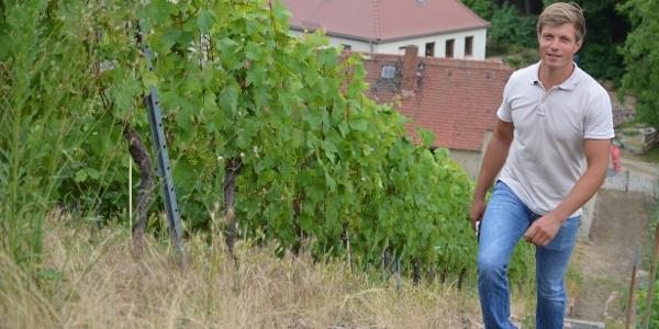 Winzer Hendrik Weber bewirtschaftet seine Weinberge überwiegend in Handarbeit.