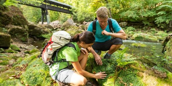 Naturschätze an den Irreler Wasserfällen