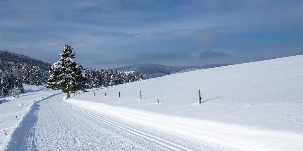 Winterwanderweg und Loipe