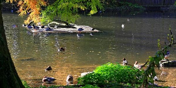 Tierpark Lange Erlen.