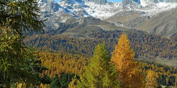 Herbst in Pontresina.