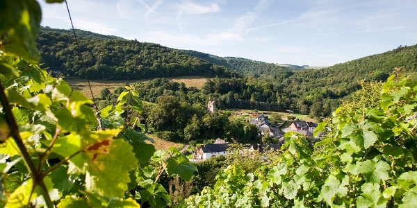 Blick aus dem Weinberg nach Sommerau