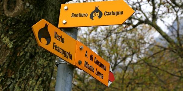 Sentiero del Castagno.
