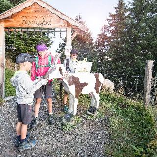 Geissen auf dem Heidipfad