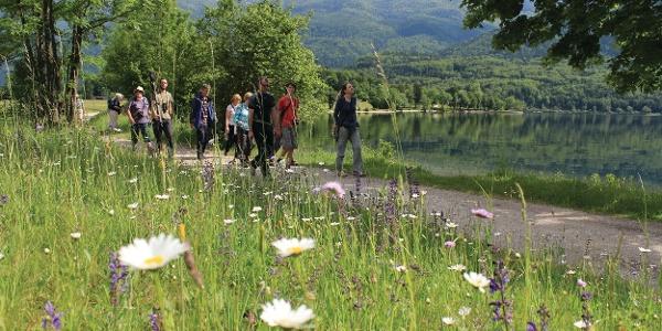 Botanische Führung am Bohinj See