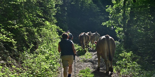 Along the trail to Mt. Mrzli vrh
