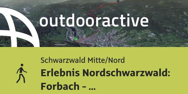 Wanderung im Nördlichen Schwarzwald: Erlebnis Nordschwarzwald: Forbach - Hornisgrinde - Schönmünzach