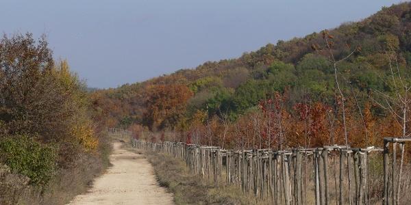 Nagykovácsiba széles erdészeti út vezet be