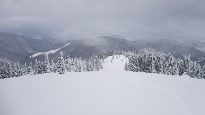 Powder descent towards the forest from Chica Pietrelor