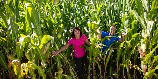 Campi di mais della Piana del Lomaso