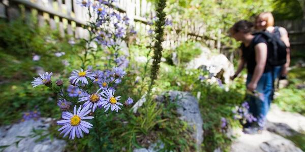 Alpinum Juliana, Alpine botanical garden