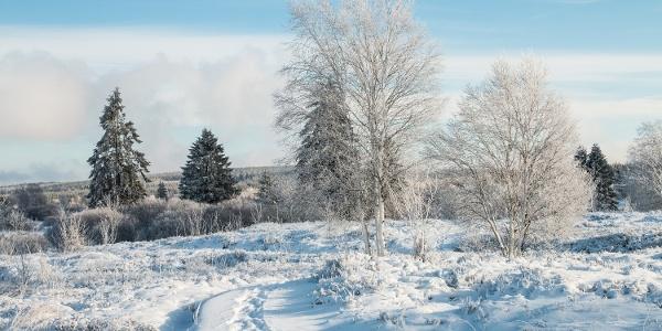 Winter im Platten Venn